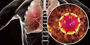 Covid vírus hatása az endotéliumra